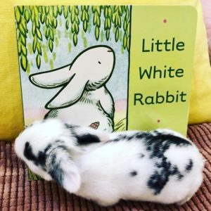 Baby Bunny Popply Seed and little Whte Rabbit Book